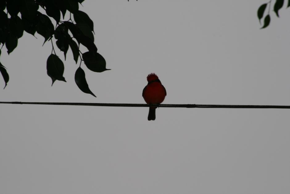 Les Papotages de Nana - Bird on the Wire